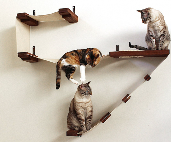 Cat Activity Wall